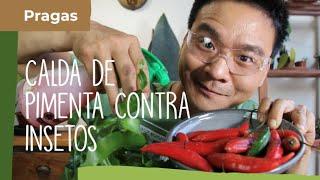 Controle pragas com pimenta (Apimente a sua relação com as pragas)