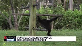 Pascua en Naples Zoo