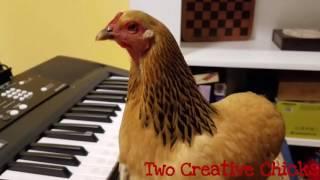 Kip speelt piano