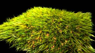 Photorealistic real grass