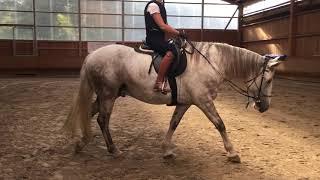 Ein blindes Pferd einschläfern? Das muss nicht sein!