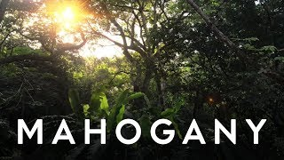 Jake Isaac - Fool For You (Audio) | Mahogany Music Club