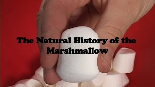 The Natural History of the Marshmallow