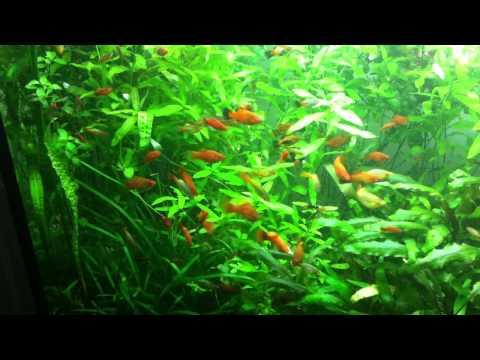 Balık ve Bitki Akvaryumu