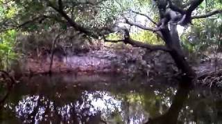 60 Second Nature Video #1 Relaxing waters