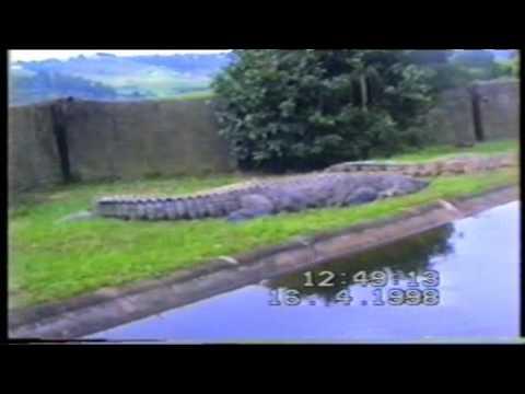 South Africa – crocodile farm