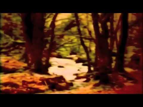 Orange de Kirsty Hawkshaw Letra y Video