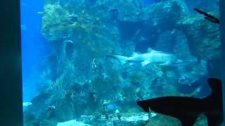 Акулы в аквариуме Флория (Турция)