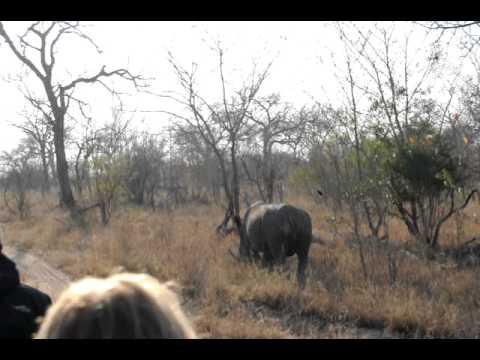 White Rhino at Lion Sand Private Game Reserve