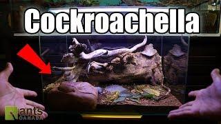 Recreating a Cockroach's Natural Habitat