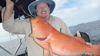 wayne's compilation of jumbo coral trout from sunshine coast australia