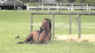 A day out with the horses -summer paradise ♥.