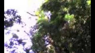 cachoeira mulamba