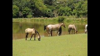 04 Fazenda Pinhal