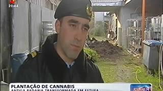 GNr de Felgueiras desmantelou fábrica de droga