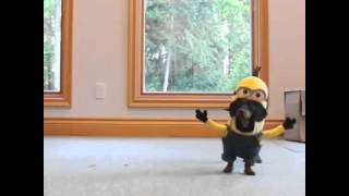 Funny clip Minnion cartoon act by dogs