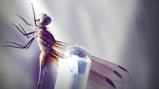 How a dragonfly's brain is designed to kill | DIY Neuroscience, a TED series width=