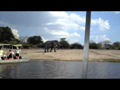 African Safari – When they meet, they must fight