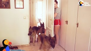 Dogs Play Hide and Seek with Mom | The Dodo