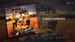 Amantes Do Alentejo - Roseira Enxertada