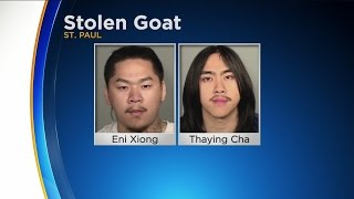 2 Arrested In St. Paul Goat Theft