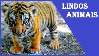 as mais lindas imagens de animais