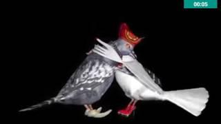 Pombos dançando (Paródia Música do Anorato Silva)