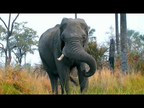 African Wildlife – Krugerpark Okavango Delta Chobe Victoria Falls – SPutnick Productions