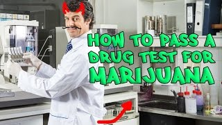 How To Pass A Drug Test [100%] [No BullShit] [Plus Myth's Exposed!!!]