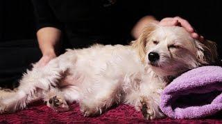 Honden krijgen eerste massage