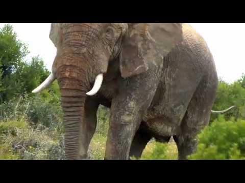 South Africa Safari – Kinetic Snapshots