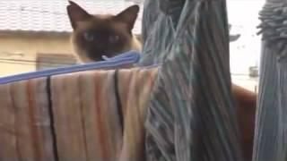 cat feat. awolnation - sail