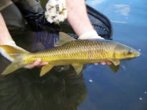 Wild fly fishing in the Karoo.wmv