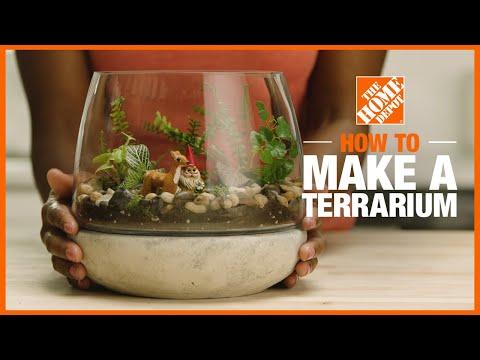 A video showing how to make a terrarium.