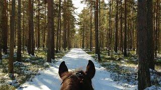 Far away in Farloon (My time in Sweden - Falun)