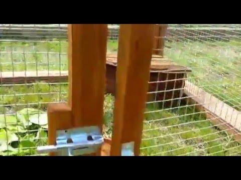 Come realizzare un recinto per le tartarughe animali dal for Terrario per tartarughe in giardino