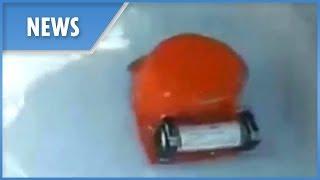 Lion Air crash: black box found