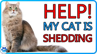 How To STOP! Shedding Fur In Cats