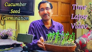 Cucumber Seed germination  Time lapse Video.