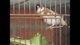 aviario ocis
