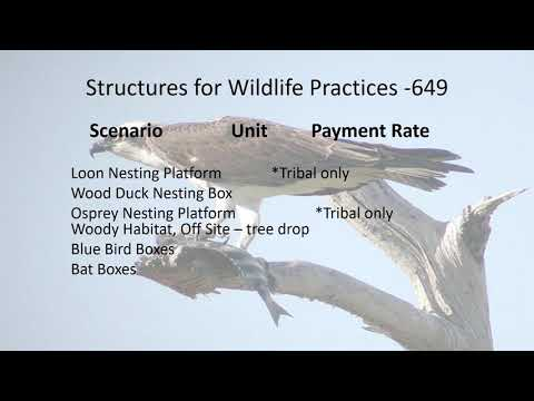 Wildlife and Forestry Webinar