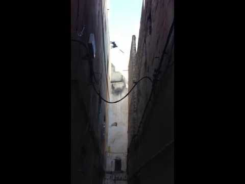 Amazing Flying Cat – Jumps from building to building over the street
