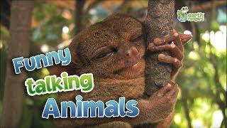 Funny Talking Animals