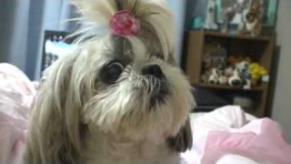 cachorro falando mamãe??dog speaking!! mom