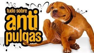 Como acabar com as pulgas e carrapatos em gatos e cachorros