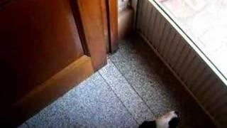 Camilo queriendo abrir la puerta - 46 días