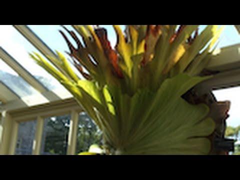 Exotic Plants at Botanic Garden, Dublin