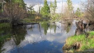 60 Seconds in Nature: Brook Trout Rising and Underwater View