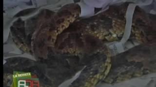 Cochabamba: Funcionarios rescataron animales silvestres