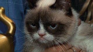 lil bub and grumpy cat meet greet